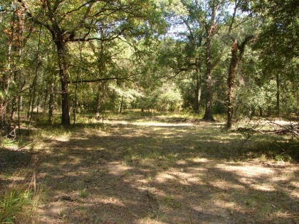 30 Wooded Acres in Midway, TX