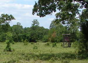 Deer Stand in Madisonville, TX